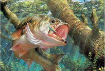 Fishing / by Celia Miller