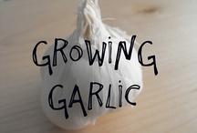 Go Garden! / by Mary Von Kirk