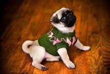 Pugs! / by Debbie Bethurum