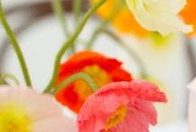 {Garden} Plants for my Garden / by Eva of BuildHouseHome