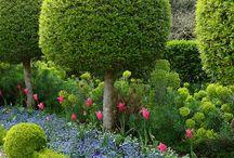 Gardening :-) / by Mahima Rao