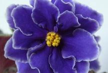 Violet voxbox / <3 / by Trish Meyers