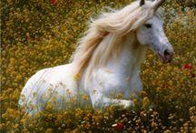 Unicorns/Pegasus / by Misty Branam