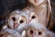 animal kingdom / by Molly Bishop