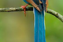 Animals/Birds & Butterflies / by Barbara Farnsworth