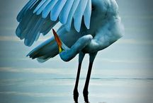 Birds....not the movie / by Echo Symmons