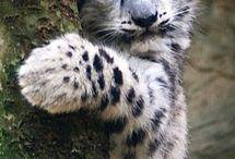 Cute animals /   / by Mima K.