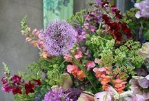 Flowers and Plants Ideas / by Jennifer Cheng