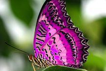 Butterflies / by Sabine Gwaltney