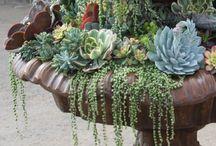 garden ideas to  try / by annatgreenoak..