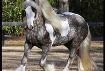 o noble horse! / by A. B.