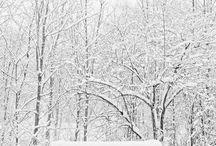 winter wonderland. / by annie francesca c