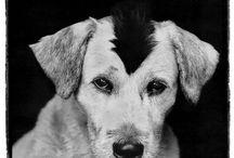 Pet Photography / by Erika Platin