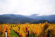 The Napa Valley / by Meadowood Napa Valley Official