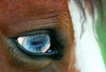 Nature ~ Horse Heaven / by Jill Fox