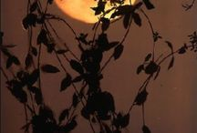 Harvest Moon / by Rita Mcmahon