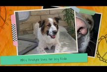 Open Your Heart #openyourheart / We are the #1 Dog Training School in North America. Offering Dog Training Certifications, as well as certifications in Dog Grooming and Veterinary Assistance. All of the dogs, cats, and animals shown in this video were adopted, rescued, or saved by an Animal Behavior College employee. / by AnimalBehaviorC