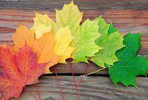 Fall / by Angela Loomis