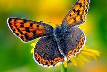 Butterfly / by Stephanie Perks
