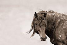 Horses / by Sara Palacios