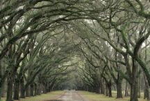 Trees Over Road...awesome! / by Jaimee Cox