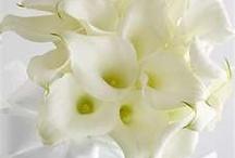 My Favorite Flowers / by Toni Nardo