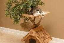 Cat Furniture / by Elizabeth Martin