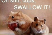 Happen' Hamsters! / by Abby Knows It All