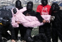 Gorillas Giving Back / by The Gorilla Glue Company