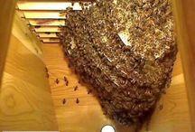 bee keeping / by Jan Litvin