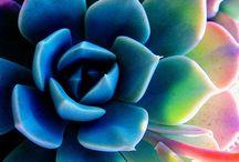 ~Flowers ~ Plants~ / by Di Hernandez