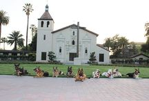 Santa Canine University & Other Furry Friends / Where our dogs and pets come to learn and lounge.  / by Santa Clara University