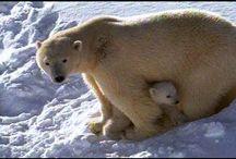 {Polar Animals} / by Samantha Morron