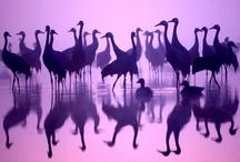 Animals-Birds-Aquatic / by Ellary Branden