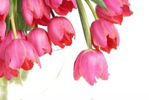 Tulips / by Cathy Stevenson