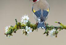 finch / by Robin&Finch