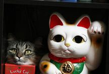 Maneki Neko / I just love lucky cats. / by Juliet Gisondi