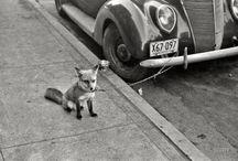 sweet foxey / by beautfl stranger