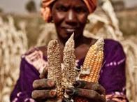 West Africa Food Crisis #Sahel  / by Oxfam ER