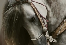 Horses / Beauty and Strength / by Crystal Bareno