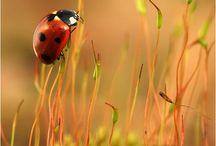Ladybugs / by Tami
