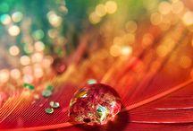 drops of dew / by Chisato Miyajima