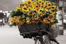 sun...flowers  / by Jolene Lamphier