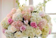 florals / by Claire Bertolotti