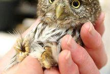 owl- baykuş / by tülay akbaş