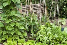 Garden Info / Tips / by Andrea Marie