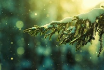 Winter / by Mary Holland