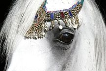 Horses / by Sharon Meinders