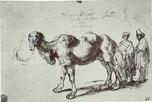 Chameau! / Un board tongue in cheek, of course, pour tout ce qui est beau dans le chameau. / by Delphine Doreau