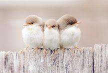 Wildlife Birds & DIY! / by Karen Roach-McBride